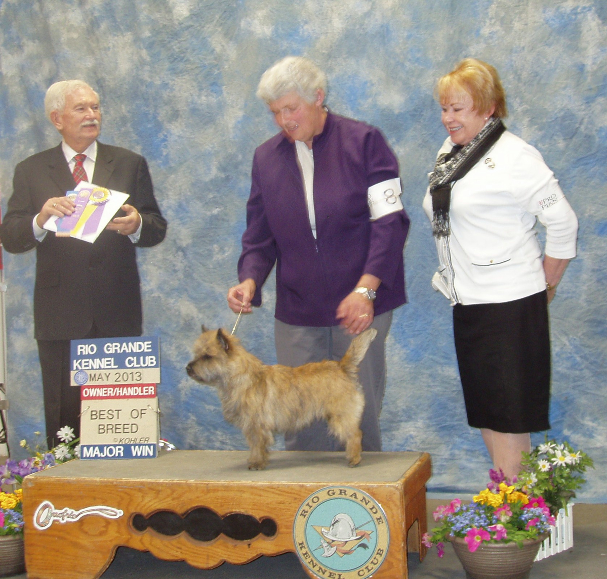 Maggi Lieber showing her Cairin Terrier, Kaila.