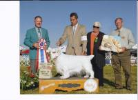 Highlight for album: Prescott Arizona Kennel Club Show